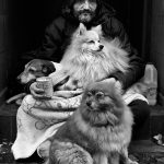 40 - John Byrne begs on the streets of Dublin with his dogs Roxy, Minty and Lilly. - Deirdre Brennan
